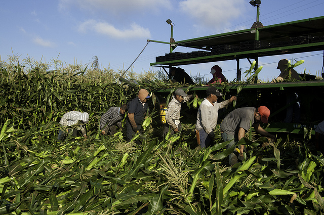 After a decade of evading responsibility, the Knesset Committee on Labor & Welfare takes step in ensuring the rights of migrant agricultural workers
