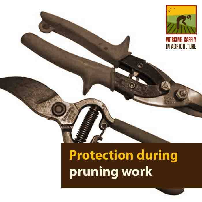 Protection during pruning work