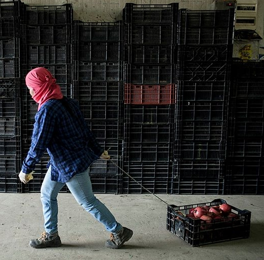 דף עמדה – ניצול מיני של מהגרות עבודה החקלאות