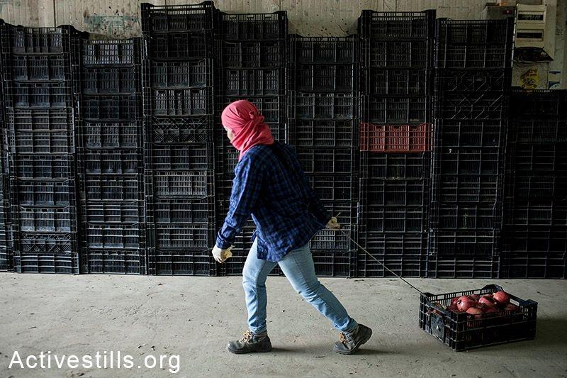תחקיר חדשות2: מסטודנטים – לפועלים זרים