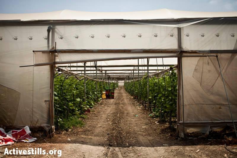"""כך עובדים ה""""מתנדבים"""" החקלאיים. 5 ימים בשבוע, 8 שעות, 15 שקל לשעה"""