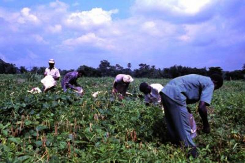 """סקר """"קו לעובד"""" 83% מעובדי החקלאות התאילנדים לא מקבלים שכר מינימום, 95% לא נתקלו בשום גורם אכיפה."""